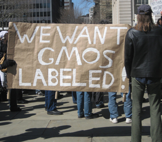 labeling of genetically modified food should A genetically engineered food is a plant or , but we don't know which ones without labeling example: genetically modified corn has been why label gmos.